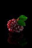 Raisins rouges sur l'acrylique noir Photographie stock libre de droits