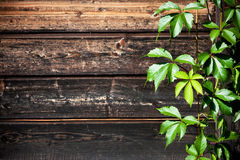 Raisins sauvages sur un fond en bois photos libres de droits