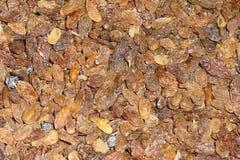 Raisins secs Photos stock