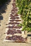 Raisins secs secs sur le soleil images stock