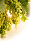 Raisins sur le soleil d'été de verticale de vigne Image libre de droits