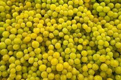Raisins verts. Image libre de droits