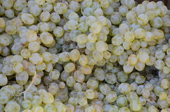 Raisins verts frais à vendre sur le marché Texture Photos stock