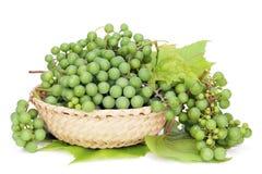 Raisins verts pour le vin sec Photos stock