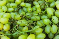 Raisins verts sur la brindille photos libres de droits