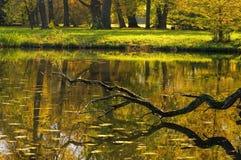 Raisons anglaises de lac Woerlitz Image stock