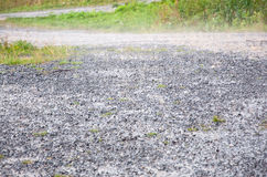 Raisons humides pluvieuses Photographie stock