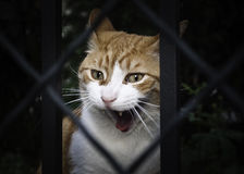 Raiva do gato Imagem de Stock