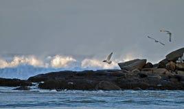 A raiva do oceano Foto de Stock