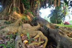 Raiz bonita da árvore Imagem de Stock Royalty Free