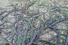 Raiz da árvore Fotografia de Stock Royalty Free