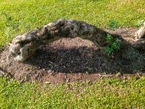 A raiz da árvore Imagens de Stock Royalty Free