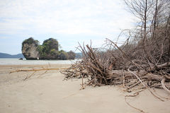 Raiz da árvore na praia da areia Imagens de Stock Royalty Free