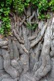 A raiz da estrutura de árvore Foto de Stock Royalty Free