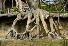 Raiz da árvore Fotos de Stock Royalty Free