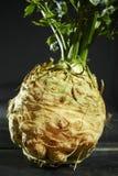 Raiz de aipo - aipo vermelho, vegetal saudável fresco Fotografia de Stock