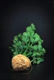 Raiz de aipo vegetal orgânica no fundo preto Imagem de Stock