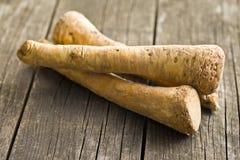 Raiz de horseradish fresca Imagens de Stock