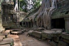 Raiz e templo Imagens de Stock