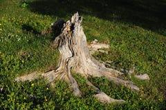 Raiz inoperante da árvore foto de stock