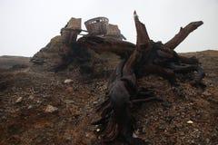 Raiz no vulcão imagens de stock royalty free