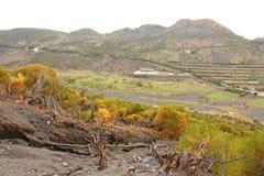 Raiz seca das árvores na ilha de Vulcan de Vulcano, Itália, Lipari imagem de stock royalty free