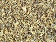 Raiz secada do liquorice (alcaçuz) Imagem de Stock Royalty Free