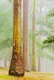 Raizes da árvore Fotografia de Stock