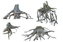 Raizes da árvore em um fundo branco Foto de Stock Royalty Free
