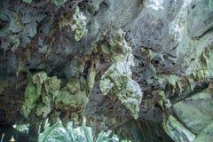 Raizes da árvore Hup em Pa Tat Imagem de Stock