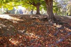 Raizes da árvore nas folhas Fotografia de Stock Royalty Free