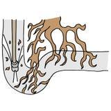 Raizes da árvore que obstruem uma tubulação Imagens de Stock Royalty Free