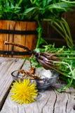 Raizes da flor do dente-de-leão Fotografia de Stock