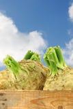 Raizes de aipo frescas com alguma folha Imagens de Stock