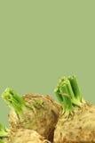 Raizes de aipo frescas com alguma folha Imagens de Stock Royalty Free