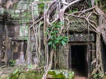 Raizes de pedra antigas da construção e da árvore, ruínas do templo de Ta Prohm, Angkor, Camboja foto de stock royalty free