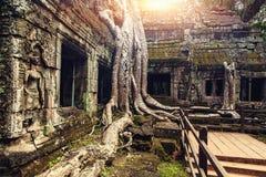 Raizes de pedra antigas da porta e da árvore do templo, Angkor Wat, Camboja Fotografia de Stock