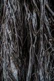 Raizes de uma árvore Imagens de Stock