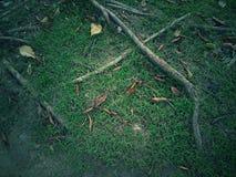Raizes do vintage e da grama verde e da madeira Fotografia de Stock