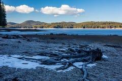 Raizes inoperantes do pinheiro cobertas no gelo no inverno, paisagem, lago Shiroka Polyana fotografia de stock
