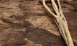 Raizes nas rochas Imagens de Stock