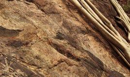 Raizes nas rochas Fotografia de Stock Royalty Free