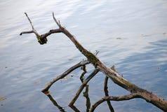 Raizes refletindo da árvore Fotografia de Stock