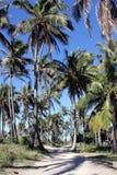 rajów palmowi drzewa Zdjęcia Royalty Free