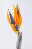 raj ptaka obrazy stock