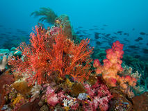 Raja Amat's reefs explode with colourful corals and fish, Indonesia Stock Photo