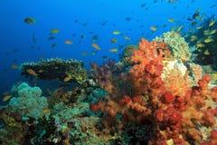 Raja Ampat Coral Reef Stock Foto