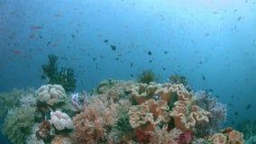 Raja Ampat Indonesia colorful coral reef 4k stock video footage
