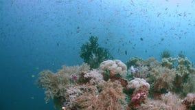 Raja Ampat Indonesia colorful coral reef 4k stock video