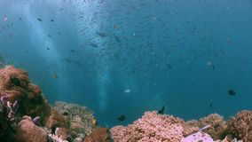 Raja Ampat Indonezja kolorowa rafa koralowa 4k zdjęcie wideo
